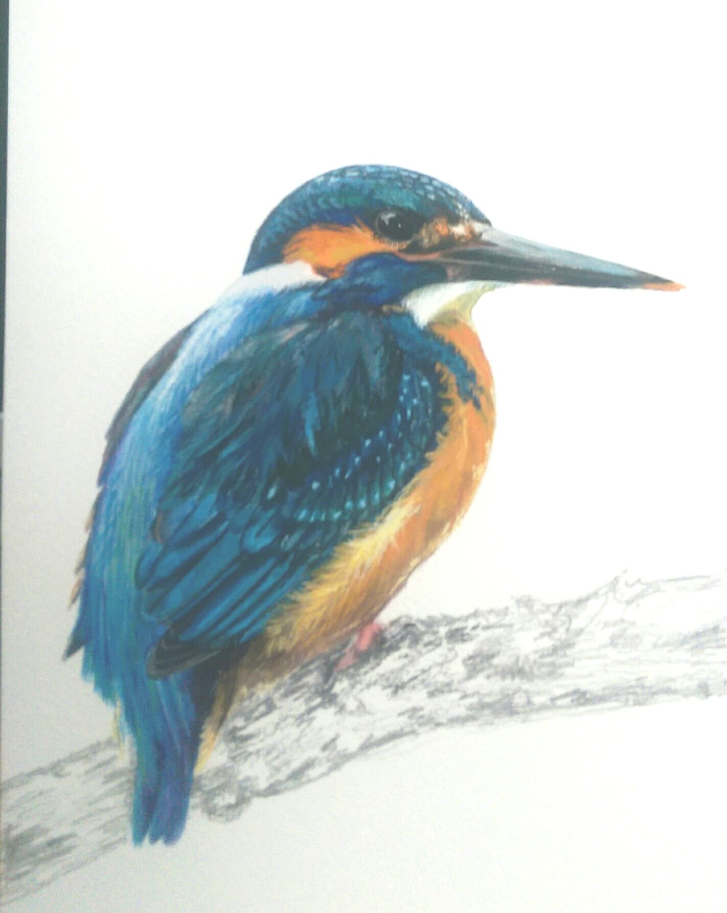 Wildlife Illustration Workshop in Cumbria, art courses Lake District