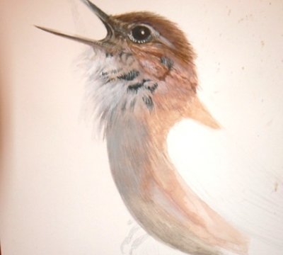 Wildlife Illustration in Watercolours/ Gouache 1 to 3 days with Simon Williams SBA